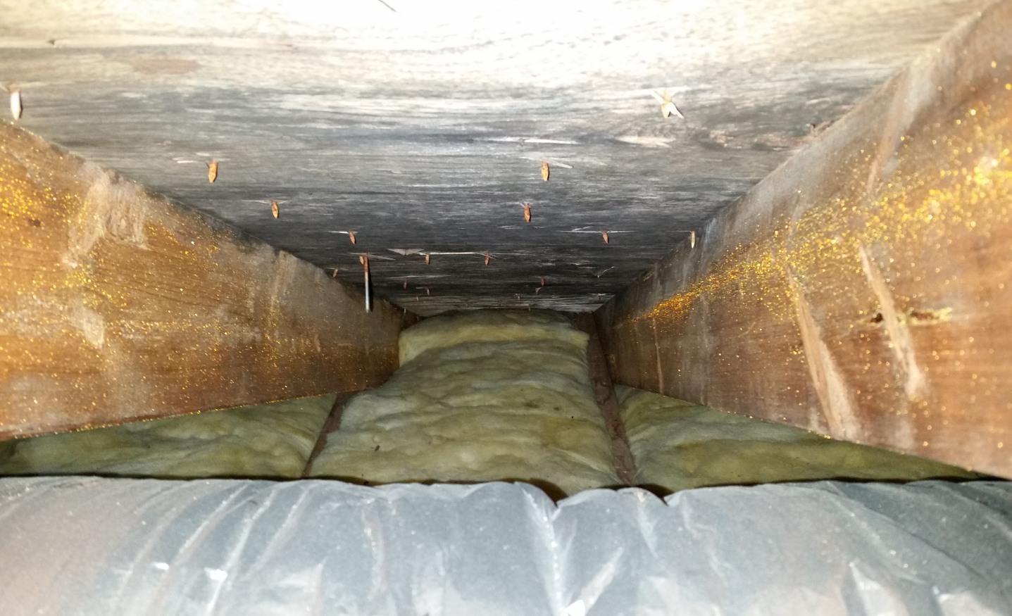 Mold Removal Salisbury