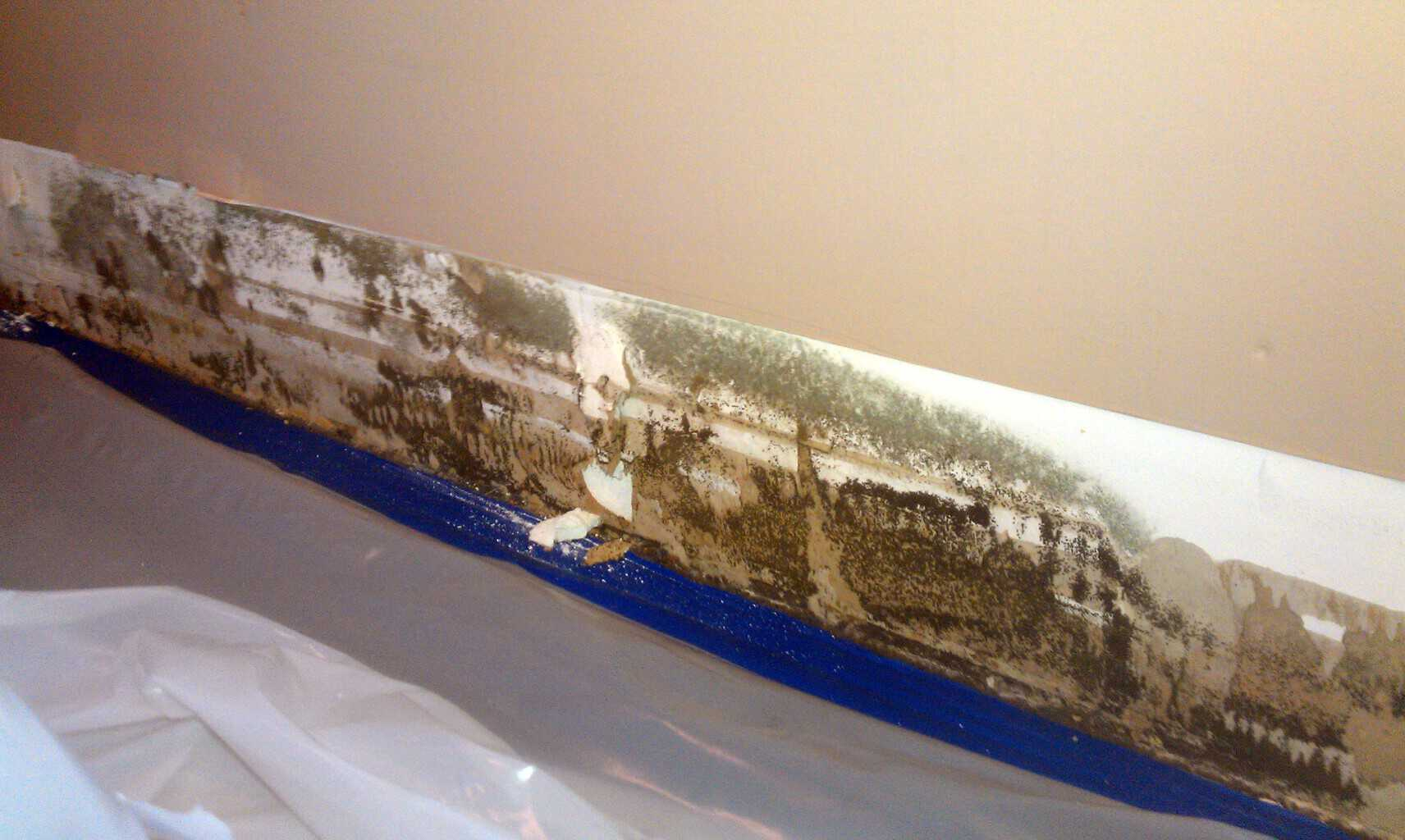 Mold Removal Bowie