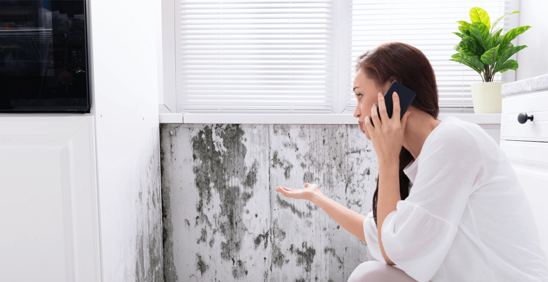 Mold Removal Bel Air