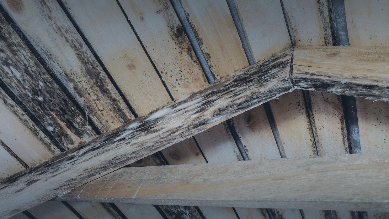 Mold Removal Glen Burnie