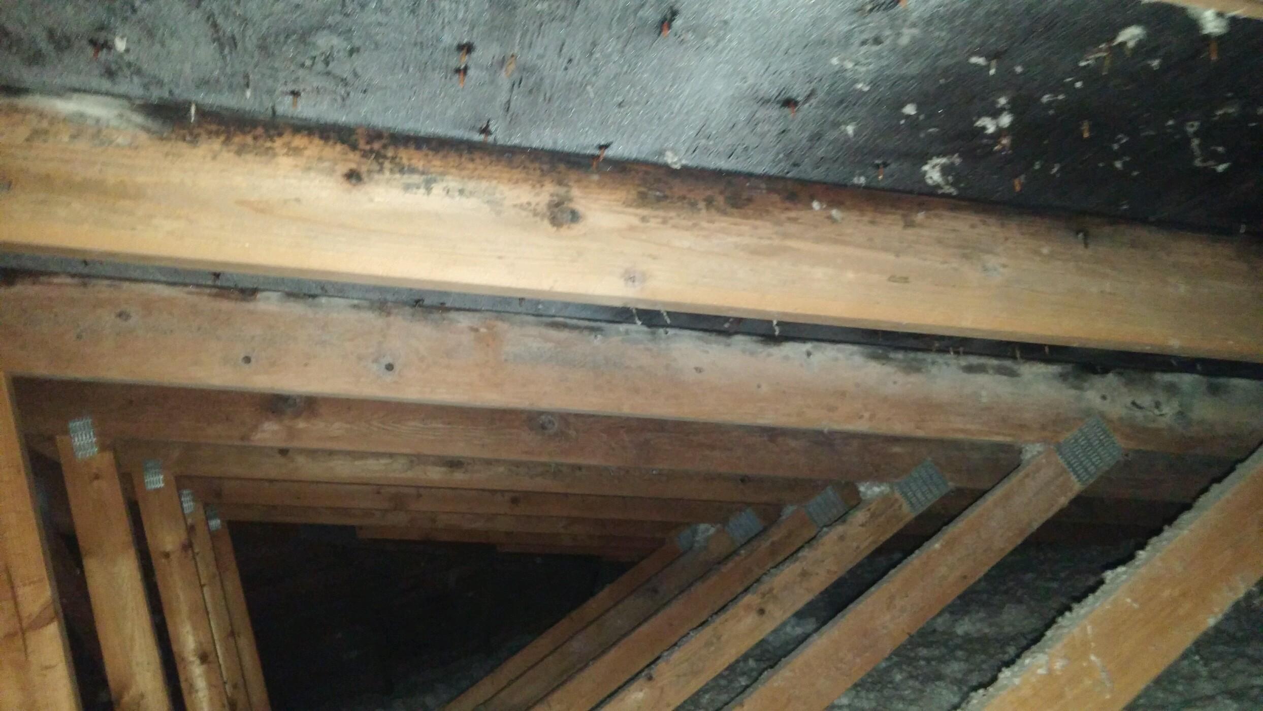 Mold Removal Towson