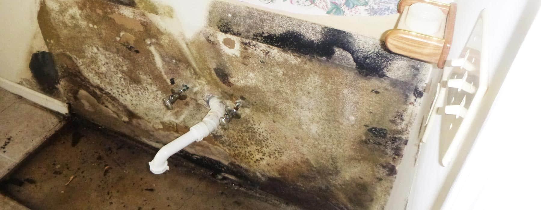 Mold Removal Potomac