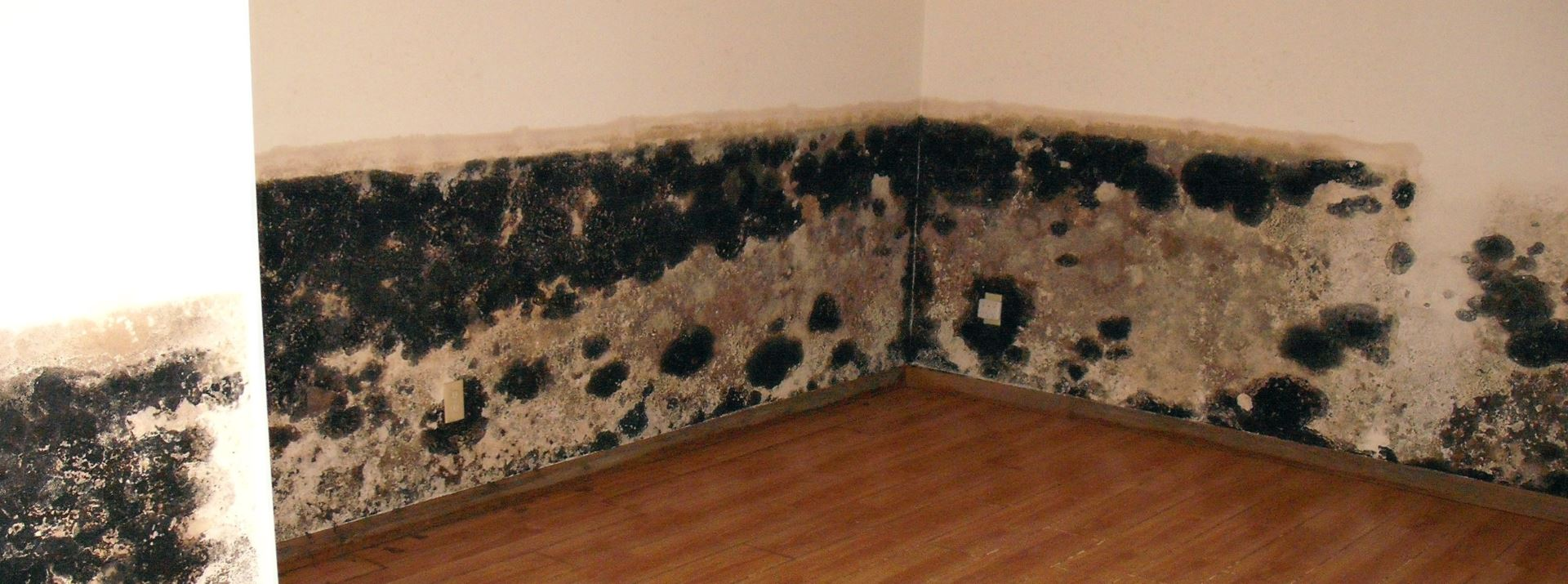 Mold Removal Annapolis