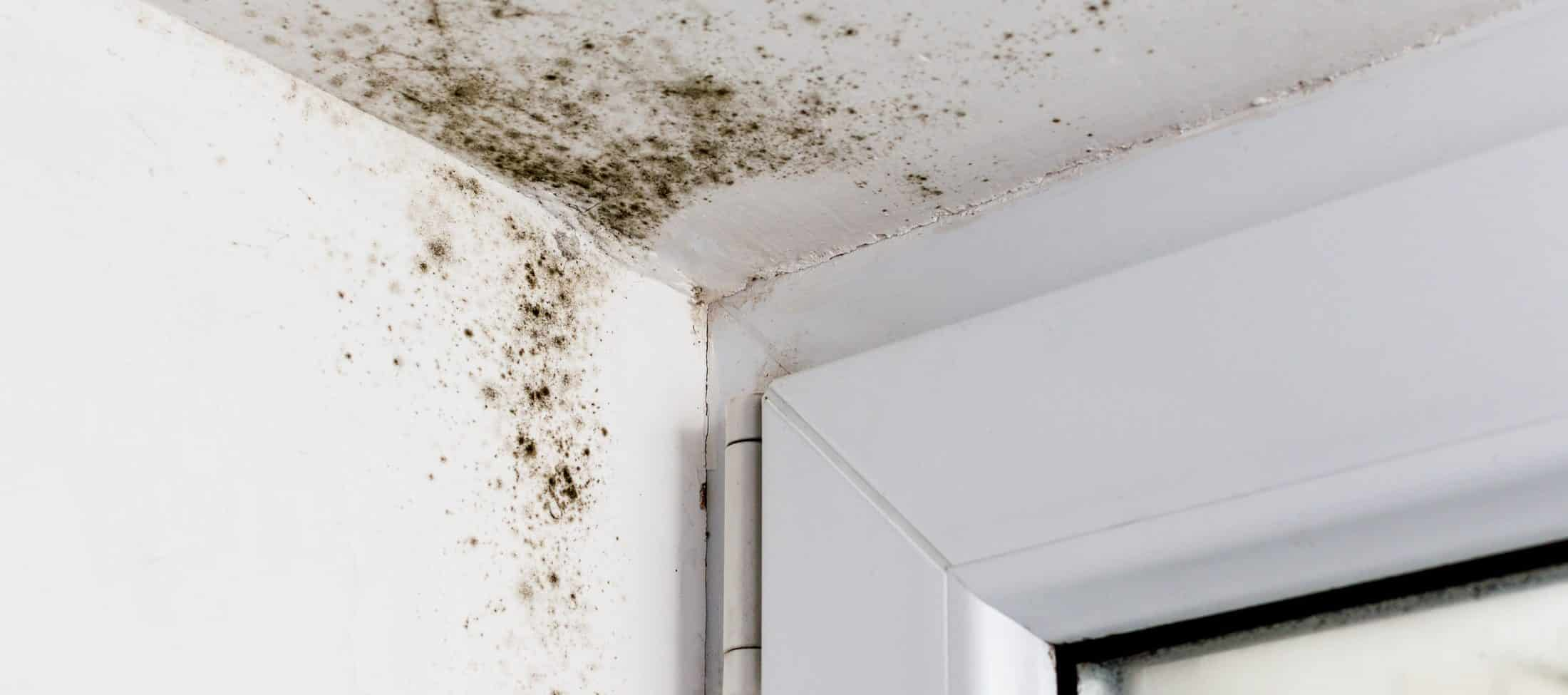 Mold Removal Rockville