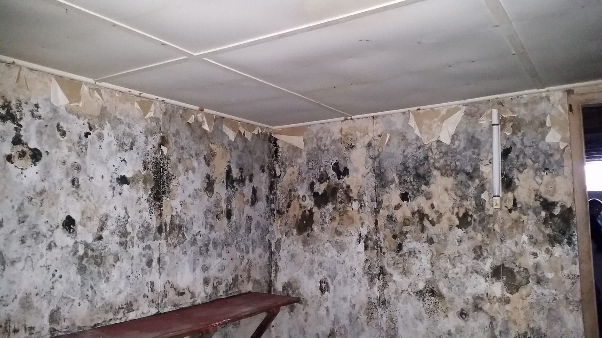 Mold Removal Silver Spring